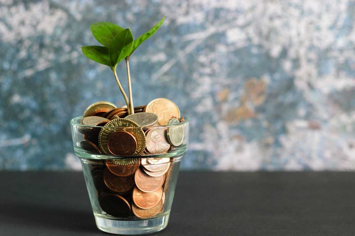 a plant growing from a jar of coins set on a table